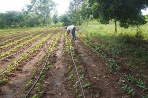 Kaputalambwe Drip Irrigation